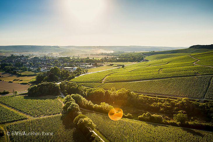 Бургундия откроет новые музеи вина