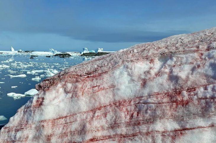 Красный снег в Антарктике