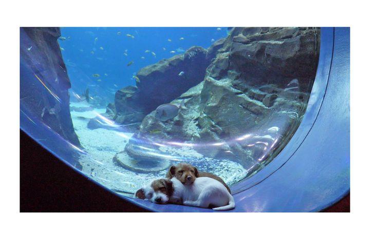 Щенки из приюта гуляют в опустевшем океанариуме -видео