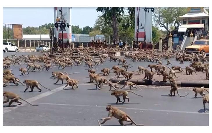 В Таиланде коронавирус спровоцировал массовую драку среди обезьян — видео