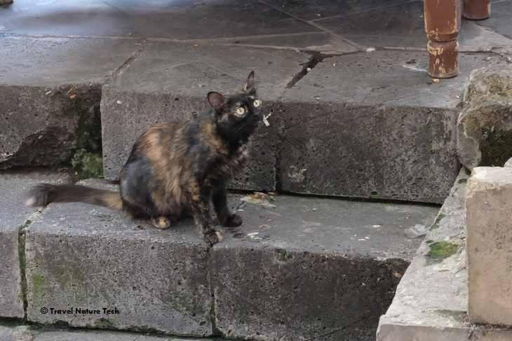 Кошка в Турции