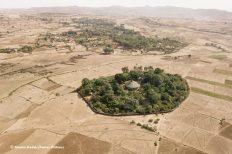 Церковные леса стали оазисами жизни в Эфиопии