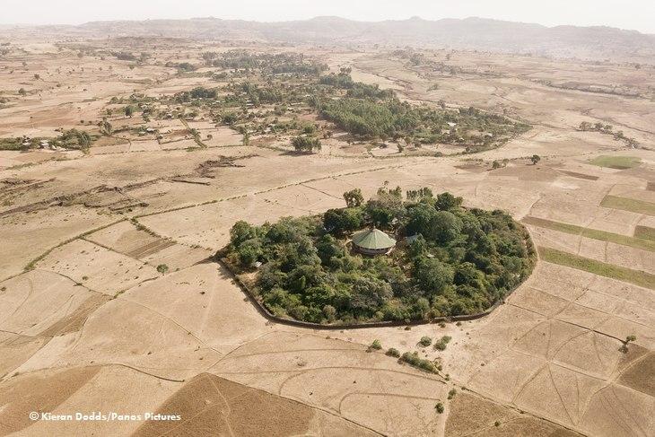 Церковные леса в Эфиопии