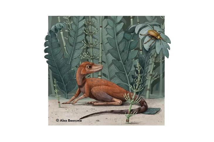 Конгонафон - предок динозавров