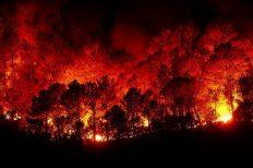 Лесные пожары на Западном побережье в США — вид из космоса