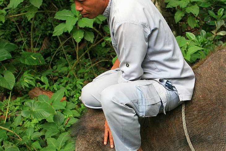 Погонщик на слоне