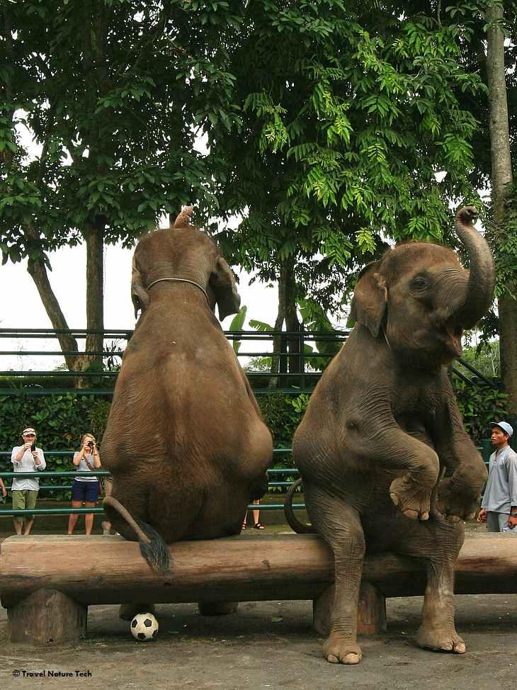 Слоновья ферма - представление