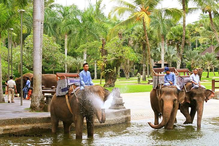 Слоновья ферма – балийская версия