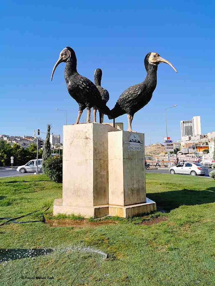 памятник лесному ибису