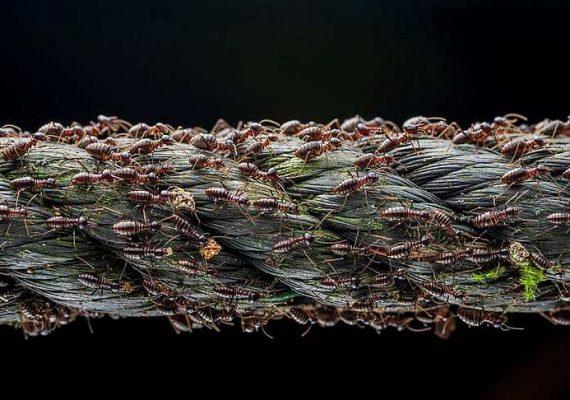 Топ-7 фото живой природы